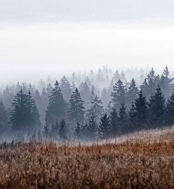 Lost In Fog by Tordis Kayma