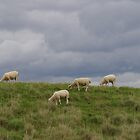 Sheep May Safely Graze by lezvee