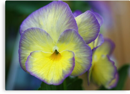 Viola -- Not Just Another Pretty Face by T.J. Martin