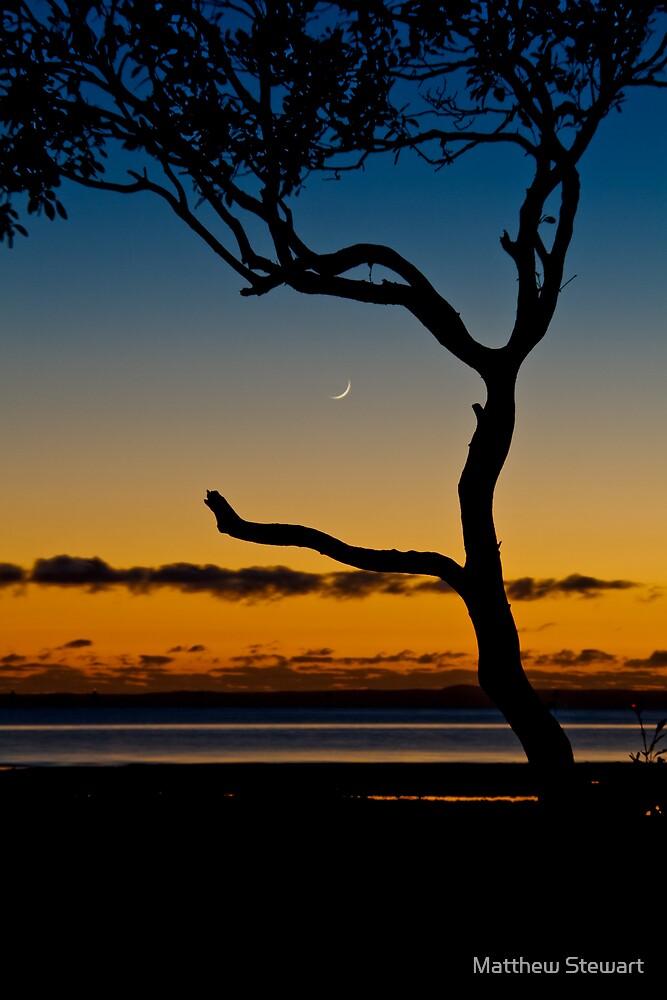 Wellington Moon by Matthew Stewart
