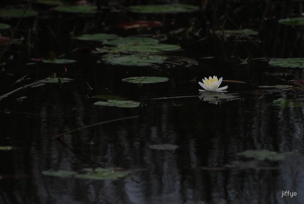 POND FLOWERS by jiffye