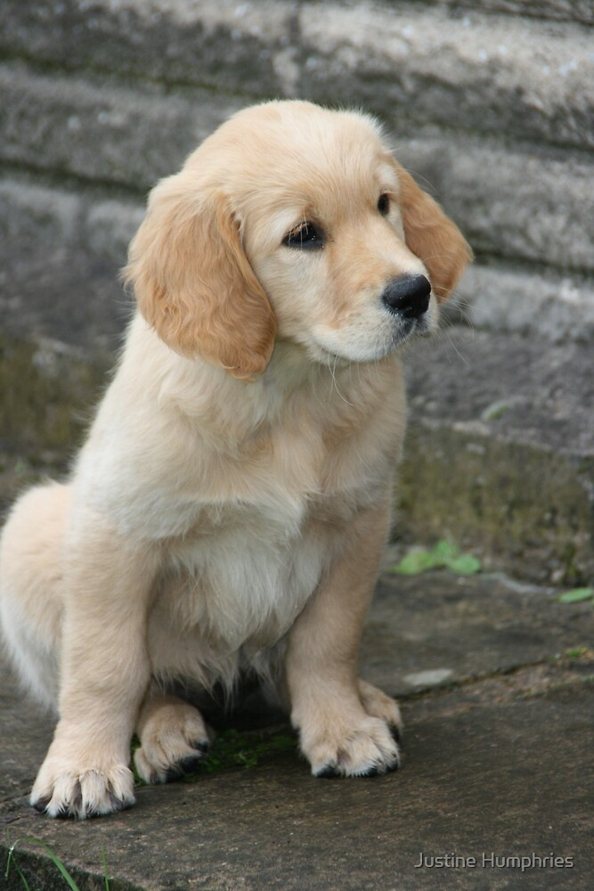 Perfect Puppy by Justine Humphries