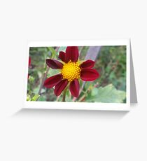 Bummpy Yellow & Red Greeting Card