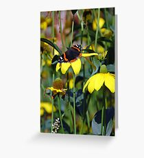 Red Admiral Butterfly on yellow daisy flowers Greeting Card