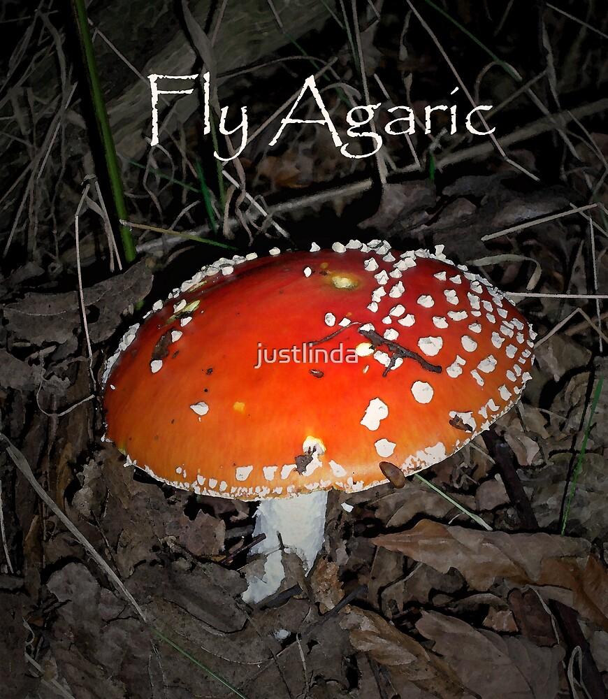 Fly Agaric by justlinda