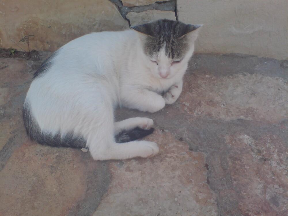 Kitten In Greece by Donna Jordan