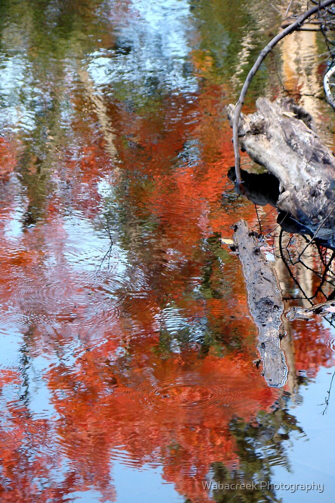 Reflection of fall colours by Jocelyne Phillips