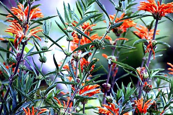 Incredible Orange Flowers by Laura Puglia