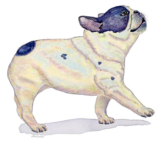French Bulldog, Black and White, French Bull Dog, Watercolor Painting by vivasweetlove