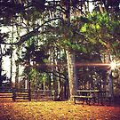 Picnic Table at the Park by Jonicool