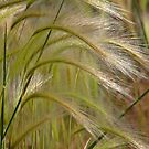 Indiangrass Swaying Softly In The Wind by Christine Till  @    CT-Graphics