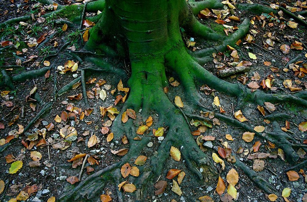 Rooted 11.. by Amanda Gazidis