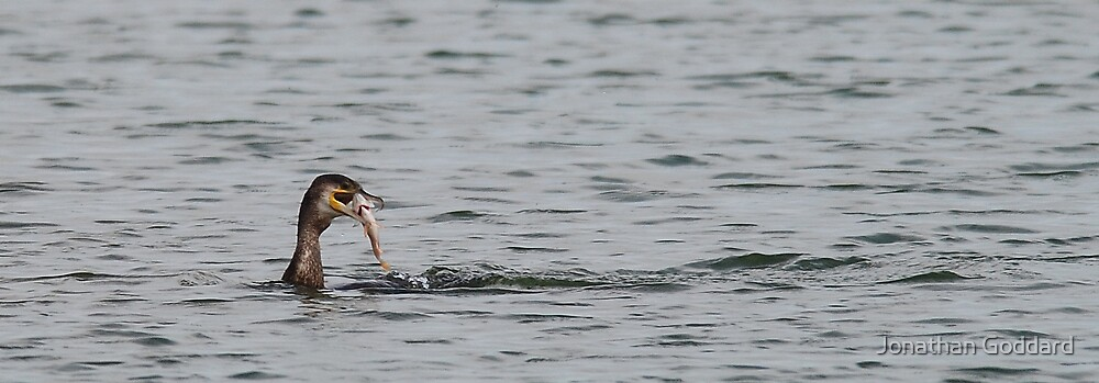 Cormorant catching lunch! by Jonathan Goddard