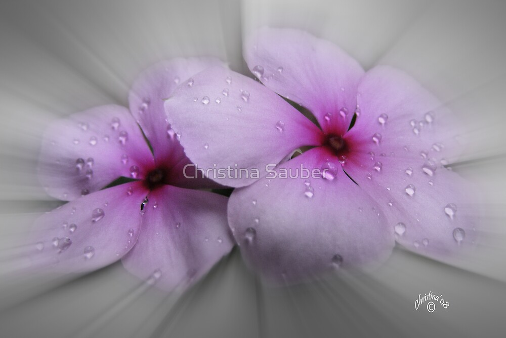 Pastels by Christina Sauber