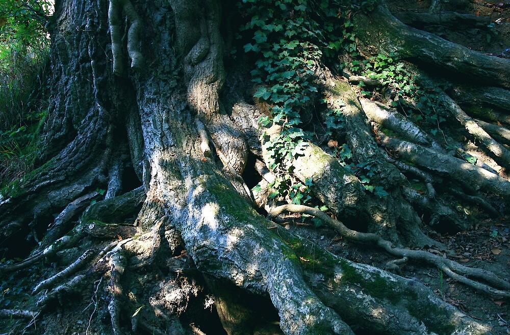 Rooted 13 by Amanda Gazidis