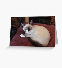 Meet Mick (Purebred Snowshoe) Greeting Card