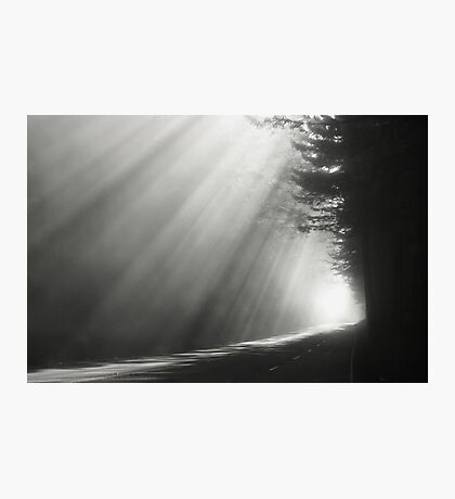 Redwood National Forest Photographic Print