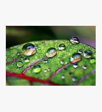 Refresh Photographic Print