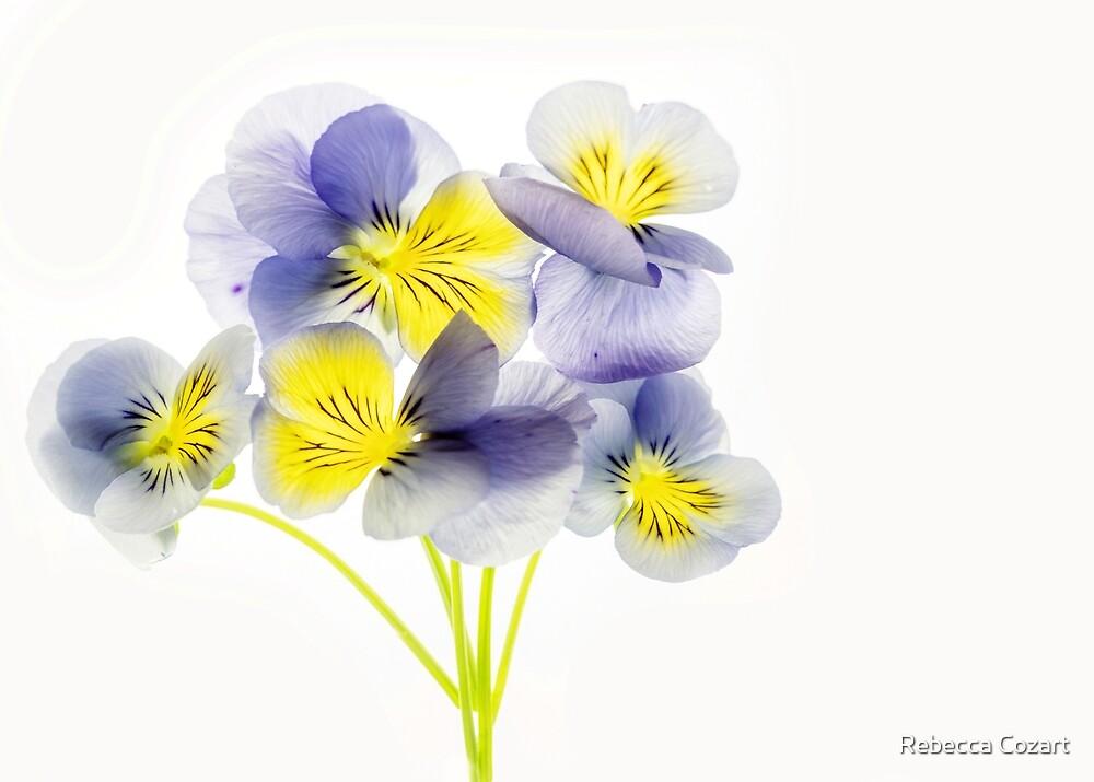Violas by Rebecca Cozart