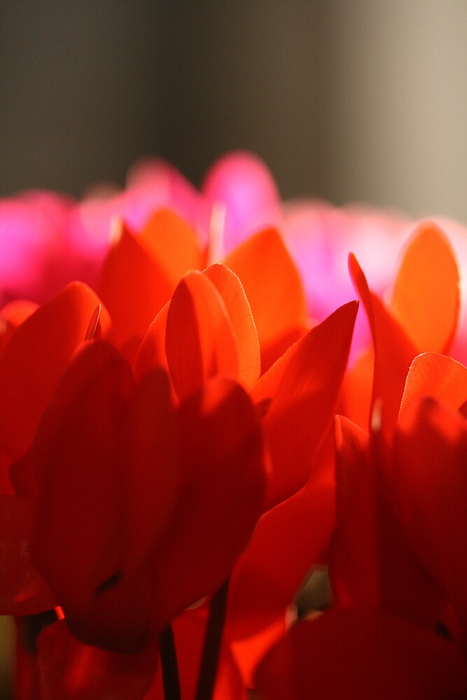 Red Flowers by torimages