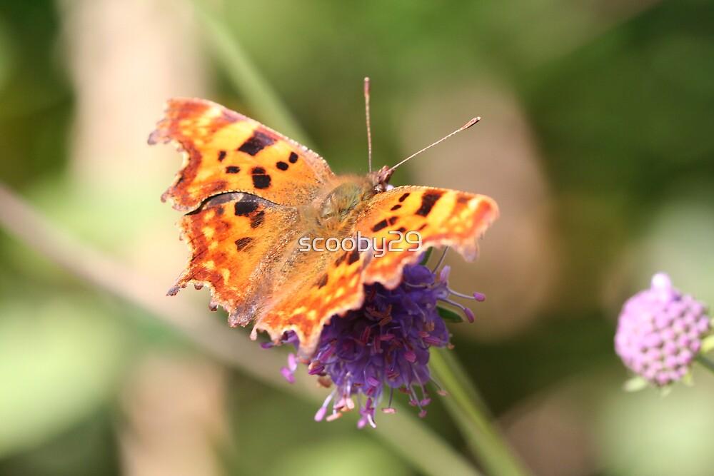 Butterfly on a purple flower by scooby29