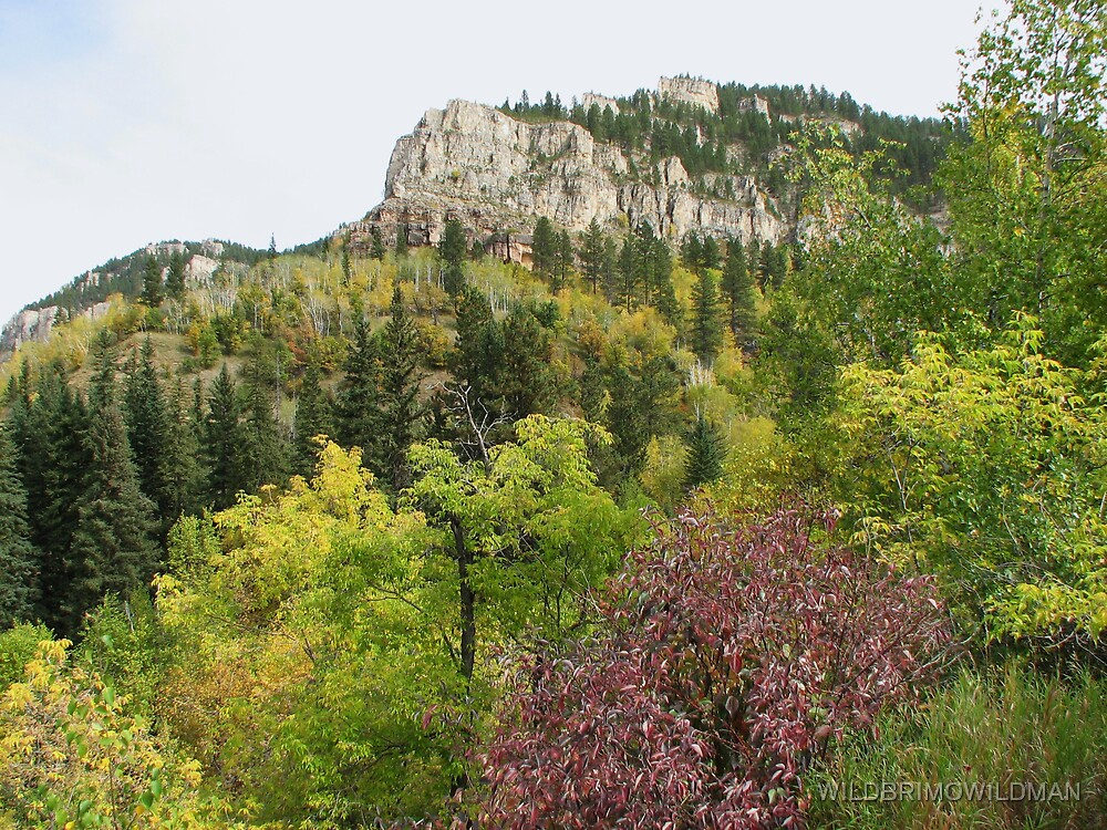 Fall Colors - Spearfish Canyon by WILDBRIMOWILDMAN
