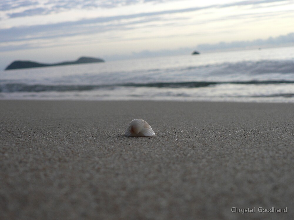 Shell by Chrystal  Goodhand