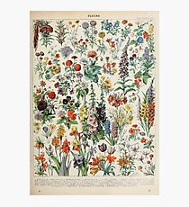 Adolphe Millot fleurs A Photographic Print