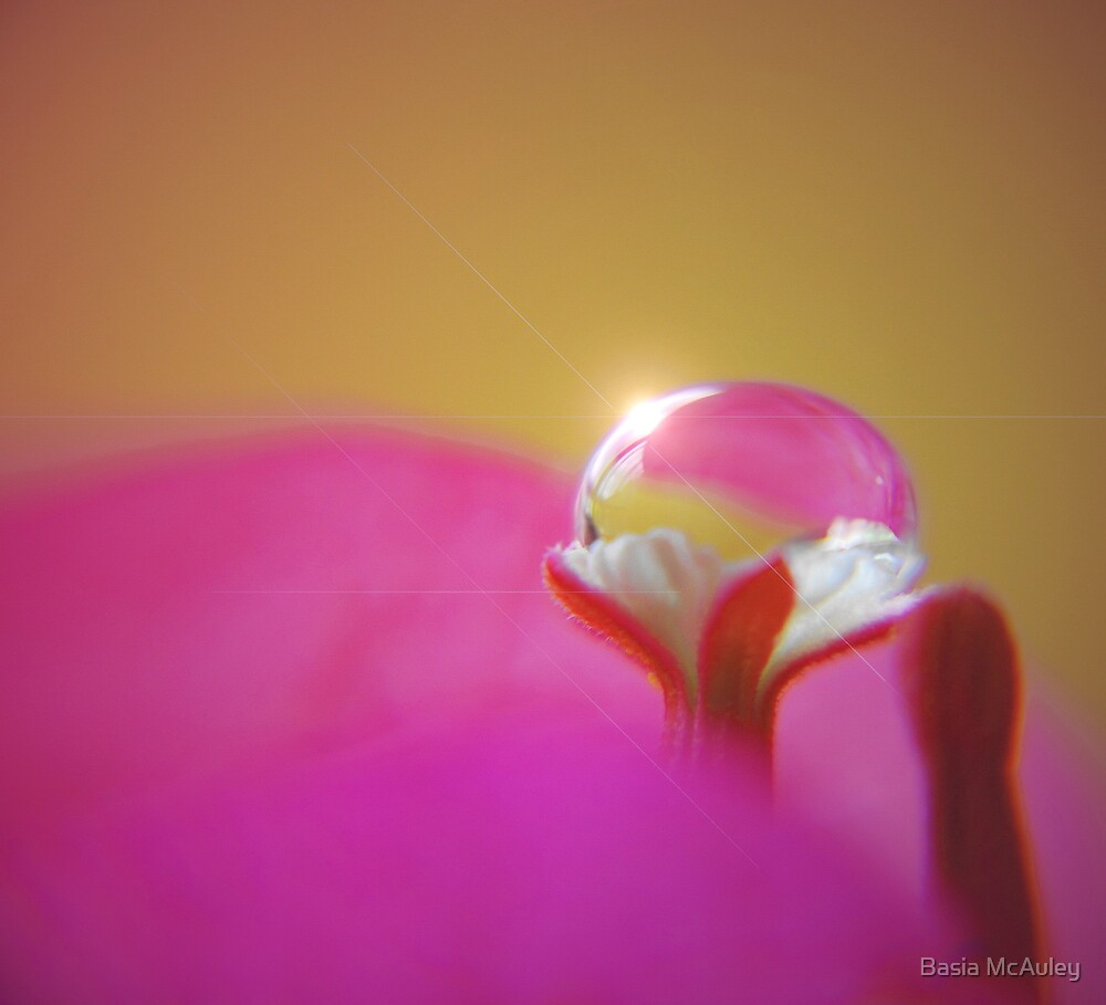Precious... by Basia McAuley