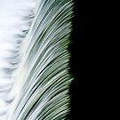 """""""Flow"""" by Bradley Shawn  Rabon"""