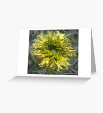 Yellow Marigold With Water Greeting Card