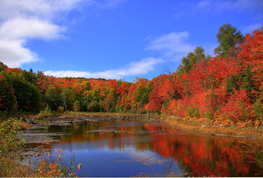 More Color Around The Pond by Sylmac