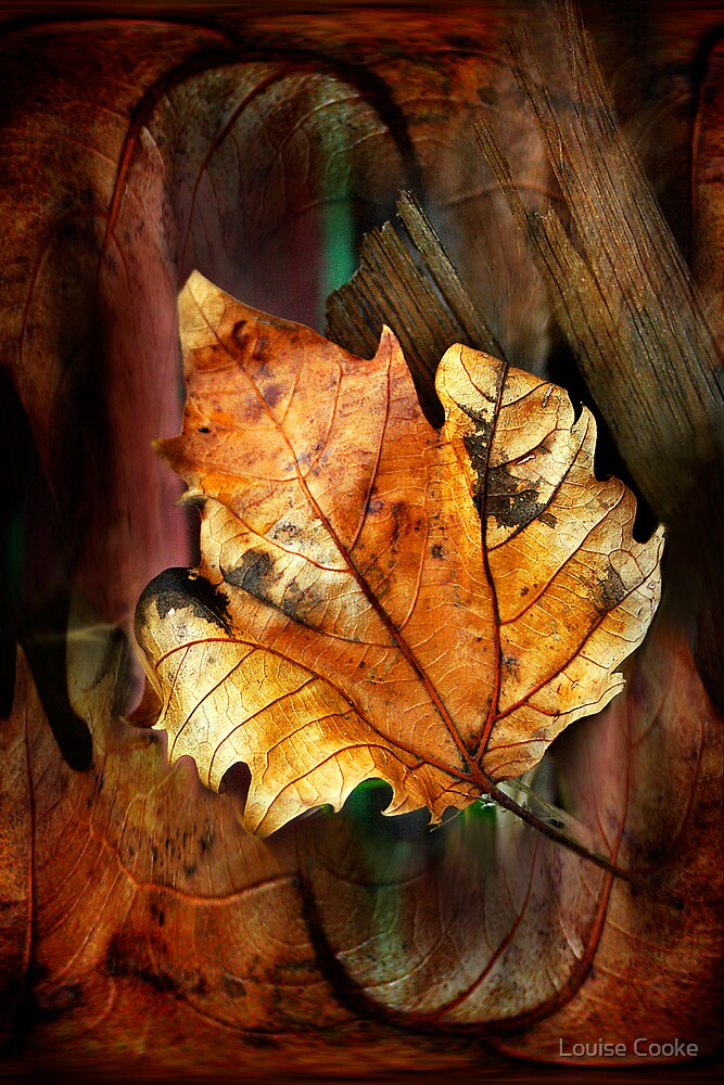 Leaf matters by Louise Cooke
