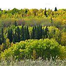 Fall Hillside by Barrie Daniels