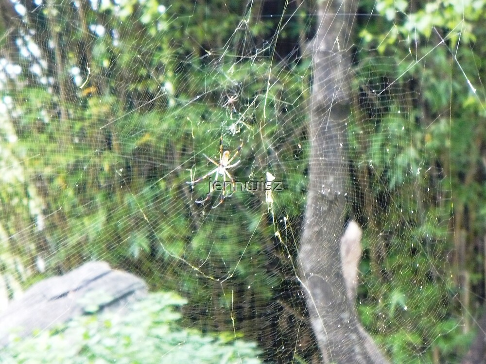 Spider by jennwisz