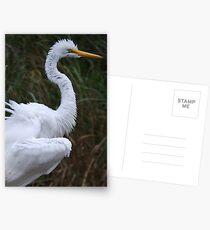 Great Egret Postcards