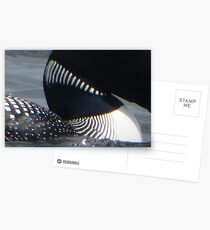 Loon Patterns Postcards
