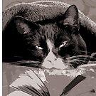Study Cat by biev