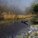 Frozen Shore on the River Wye by John Dunbar