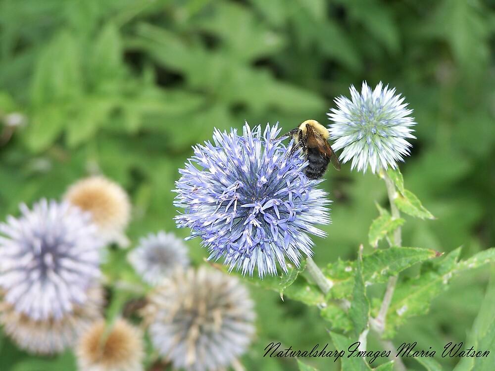Bee utiful by naturalsharp