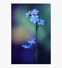 Cobalt Photographic Print