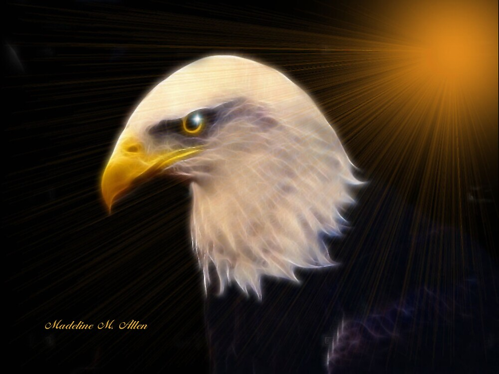 AMERICAN BALD EAGLE  #2 by Madeline M  Allen