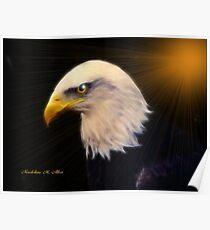 AMERICAN BALD EAGLE  #2 Poster