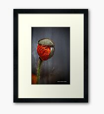 Out Of Darkness Grows Flowers Framed Print