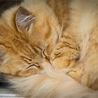 Sleepy Cat by Clare Colins