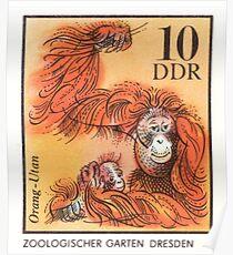 1975 East Germany Zoo Orangutan Postage Stamp Poster