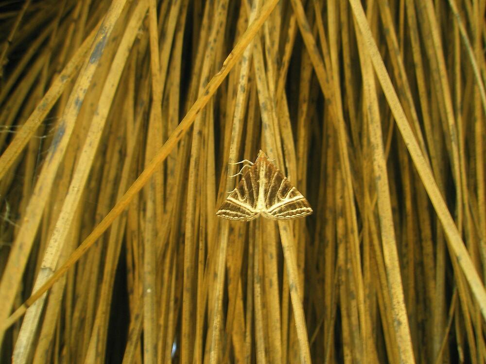 Moth by Melissa Park