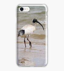 Australian White Ibis (2188) iPhone Case/Skin