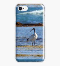 Australian White Ibis (4928) iPhone Case/Skin