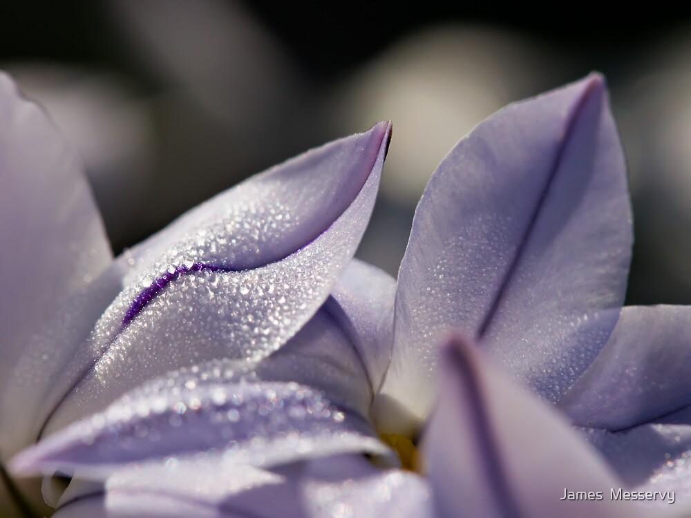 Petal Dew by James  Messervy